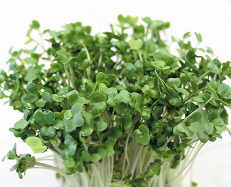 Broccoli Sprouts May Help Grow Hair Hairloss News
