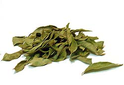 hair-loss-curry-leaves
