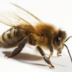 bee venom and hair loss