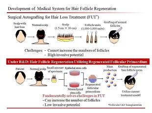 Development_of_Medical_System_for_Hair_Follicle_Regeneration