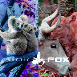 Arctic Fox To Donate 100% Of February Sales To Various Charities That Help Protect Animals