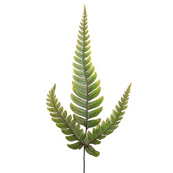 New extract from fern effective for hair loss