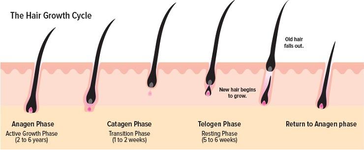 Hair Loss Men and Women